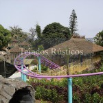 081-teja-tropical-loro-parque